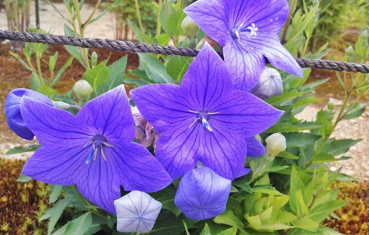 1番花が咲き出しましたのイメージ